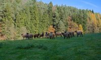 Чешская Швейцария — национальный парк