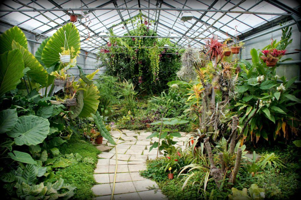 Теплице, Ботанический сад