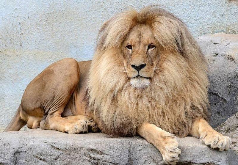 Городской зоопарк Усти-над-Лабем